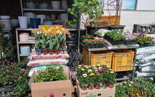 В Южной Корее вовсю весна